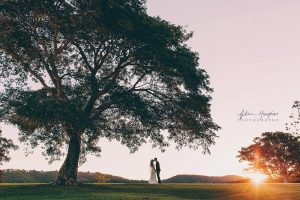 wedding couple kiss under the tree